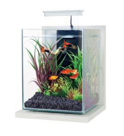 Zolux aquarium kit jalaya antique wit